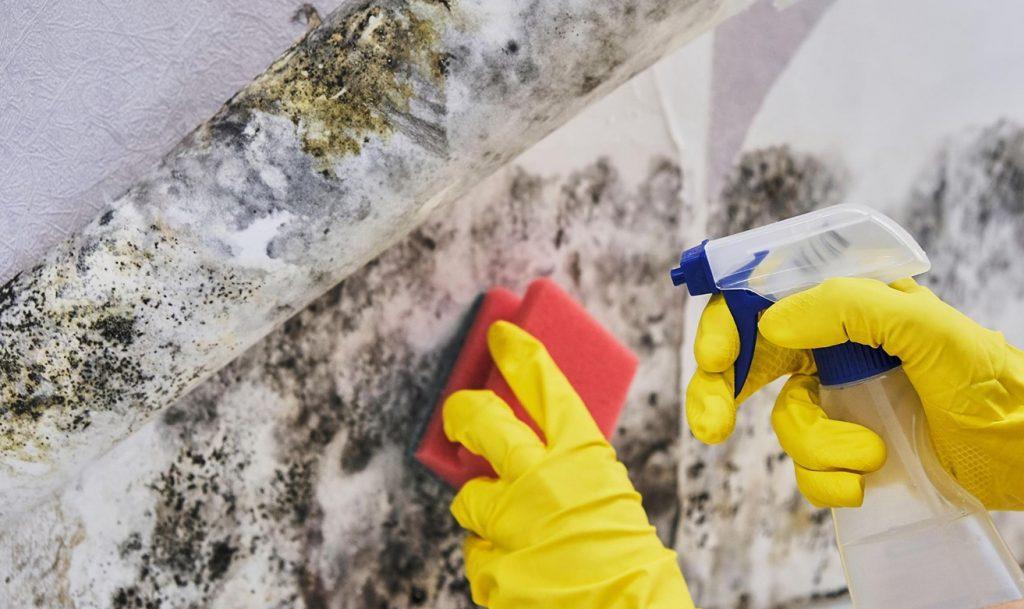 mold remediation companies